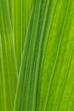 Η όμορφη κινηματογράφηση σε πρώτο πλάνο ενός gladiolus φεύγει αφηρημένη ανασκόπηση πράσινη Στοκ φωτογραφία με δικαίωμα ελεύθερης χρήσης