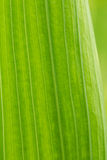 Η όμορφη κινηματογράφηση σε πρώτο πλάνο ενός gladiolus φεύγει αφηρημένη ανασκόπηση πράσινη Στοκ Φωτογραφίες