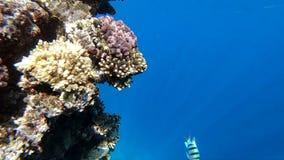 Η όμορφη κοραλλιογενής ύφαλος είναι βαθιά κάτω από το νερό, αναμμένο από το φως του ήλιου, σε αργή κίνηση φιλμ μικρού μήκους