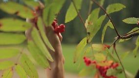Η όμορφη νέα γυναίκα στα παραδοσιακά ενδύματα ukrainain που επιλέγει guelder αυξήθηκε μούρα στο δάσος φιλμ μικρού μήκους