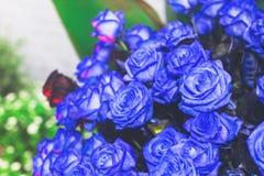Η όμορφη ομάδα μπλε αυξήθηκε Στοκ φωτογραφίες με δικαίωμα ελεύθερης χρήσης