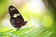 Η όμορφη πεταλούδα κάθεται στο φύλλο Στοκ Φωτογραφία