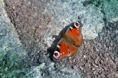 Η όμορφη πολύχρωμη πεταλούδα κάθεται στους βράχους με τα ανοικτά φτερά Στοκ φωτογραφία με δικαίωμα ελεύθερης χρήσης