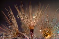 Η όμορφη πτώση νερού στο λουλούδι Στοκ Εικόνα