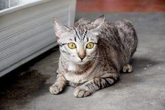 Η όμορφη ριγωτή γάτα σε ένα πάρκο βλέπει σε κάτι 0952 Στοκ εικόνα με δικαίωμα ελεύθερης χρήσης