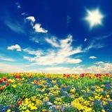 Η όμορφη τουλίπα ανθίζει τον τομέα και το νεφελώδη μπλε ουρανό Στοκ Εικόνες