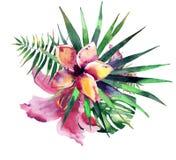 Η όμορφη φωτεινή καλή θαυμάσια τροπική floral βοτανική θερινή ζωηρόχρωμη σύνθεση της Χαβάης της τροπικής κόκκινης ρόδινης βιολέτα ελεύθερη απεικόνιση δικαιώματος