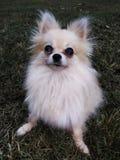Η όμορφη Bella στοκ φωτογραφία με δικαίωμα ελεύθερης χρήσης