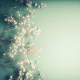 Η όμορφη floral ευχετήρια κάρτα με λίγο άσπρο Gypsophila ανθίζει στο τυρκουάζ υπόβαθρο, αρκετά floral σύνορα Στοκ Εικόνες
