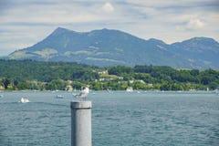 Η όμορφη Luzern λίμνη Στοκ Εικόνα