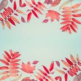 Η όμορφο εποχιακό σύνθεση ή το σχέδιο φθινοπώρου έκανε με τα διάφορα ζωηρόχρωμα φύλλα πτώσης στο τυρκουάζ μπλε υπόβαθρο, τοπ άποψ Στοκ Φωτογραφίες