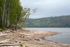 Η όχθη ποταμού με τα κούτσουρα στοκ φωτογραφίες