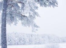 η όψη Στοκ φωτογραφία με δικαίωμα ελεύθερης χρήσης