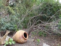 Η Alamo αγγειοπλαστική κήπων στοκ εικόνα