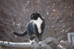 Η Betty η mischivous γάτα κατασκοπεύει ένα πουλί στον τομέα Στοκ εικόνα με δικαίωμα ελεύθερης χρήσης