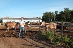 Η Farmer λειτουργεί στο αγρόκτημα με τις γαλακτοκομικές αγελάδες Στοκ εικόνα με δικαίωμα ελεύθερης χρήσης