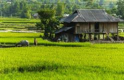 Η Farmer στον τομέα ρυζιού στο Βιετνάμ Στοκ Εικόνες