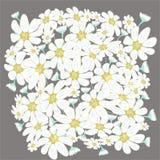 Η Floral διανυσματική απεικόνιση περιλαμβάνει chamomiles Στοκ Εικόνα