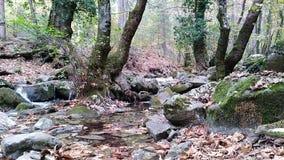 Η Ida είναι επίσης ένας ποταμός απόθεμα βίντεο