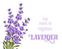Η lavender κομψή κάρτα Στοκ φωτογραφία με δικαίωμα ελεύθερης χρήσης
