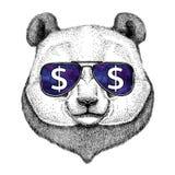 Η Panda αντέχει, το μπαμπού αντέχει τα γυαλιά με την απεικόνιση σημαδιών δολαρίων με το άγριο ζώο για την μπλούζα, σκίτσο δερματο Στοκ εικόνα με δικαίωμα ελεύθερης χρήσης