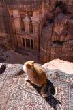 Η Petra, το ροδαλοί διάσημοι ορόσημο πόλεων και ο προορισμός ταξιδιού στην Ιορδανία, με μια γάτα απολαμβάνουν στοκ εικόνες με δικαίωμα ελεύθερης χρήσης