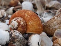 Η Shell πέθανε Στοκ Φωτογραφίες