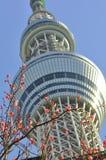 θάλαμος δέντρων πύργων του Τόκιο sumida ουρανού της Ιαπωνίας Στοκ Εικόνες