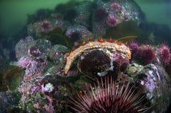 θάλασσα αγγουριών Στοκ φωτογραφίες με δικαίωμα ελεύθερης χρήσης
