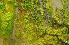 θάλασσα αλγών Στοκ Εικόνες