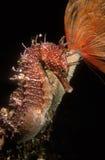 θάλασσα αλόγων Στοκ φωτογραφία με δικαίωμα ελεύθερης χρήσης