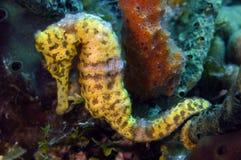 θάλασσα αλόγων Στοκ εικόνα με δικαίωμα ελεύθερης χρήσης