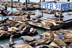 θάλασσα αποβαθρών 39 λιοντ στοκ εικόνες