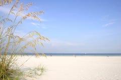θάλασσα βρωμών Στοκ εικόνα με δικαίωμα ελεύθερης χρήσης
