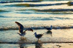θάλασσα γλάρων ακτών Στοκ εικόνες με δικαίωμα ελεύθερης χρήσης