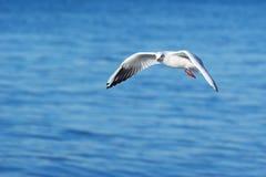 θάλασσα γλάρων ανασκόπησ&et Στοκ εικόνα με δικαίωμα ελεύθερης χρήσης