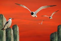 θάλασσα γλάρων Στοκ Φωτογραφία