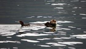 θάλασσα ενυδρίδων Στοκ φωτογραφία με δικαίωμα ελεύθερης χρήσης