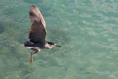 θάλασσα ερωδιών Στοκ φωτογραφίες με δικαίωμα ελεύθερης χρήσης