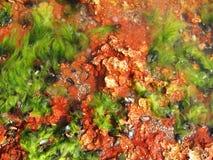 θάλασσα ζωής ανασκόπησης Στοκ φωτογραφία με δικαίωμα ελεύθερης χρήσης