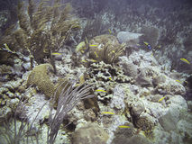 θάλασσα ζωής κάτω Στοκ Φωτογραφίες