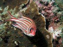 θάλασσα ζωής τροπική στοκ φωτογραφία