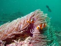 θάλασσα ζωής τροπική Στοκ Εικόνες
