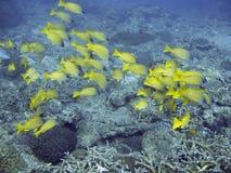 θάλασσα ζωής τροπική Στοκ εικόνες με δικαίωμα ελεύθερης χρήσης