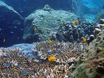 θάλασσα ζωής τροπική Στοκ φωτογραφία με δικαίωμα ελεύθερης χρήσης