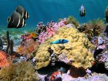 θάλασσα ζωής χρωμάτων Στοκ Φωτογραφίες