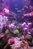 θάλασσα ζωής ψαριών Στοκ εικόνες με δικαίωμα ελεύθερης χρήσης