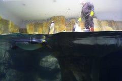 θάλασσα ζωής Στοκ φωτογραφία με δικαίωμα ελεύθερης χρήσης