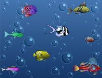 θάλασσα κάτω Στοκ εικόνες με δικαίωμα ελεύθερης χρήσης
