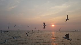 Θάλασσα και ήλιος πουλιών στοκ φωτογραφία με δικαίωμα ελεύθερης χρήσης